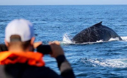 Photographing whales near Cape Town, South Africa
