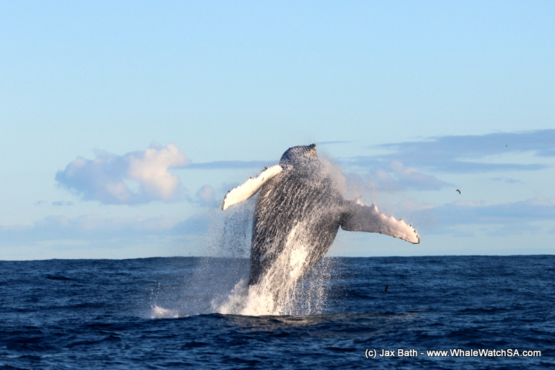 A fantastic Friday out on the ocean, 10 August 2018