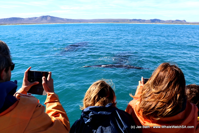 A perfect day of whale watching, 18 August 2018