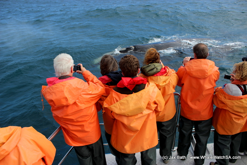 A Windy Whale Watching Adventure, 14 September 2018