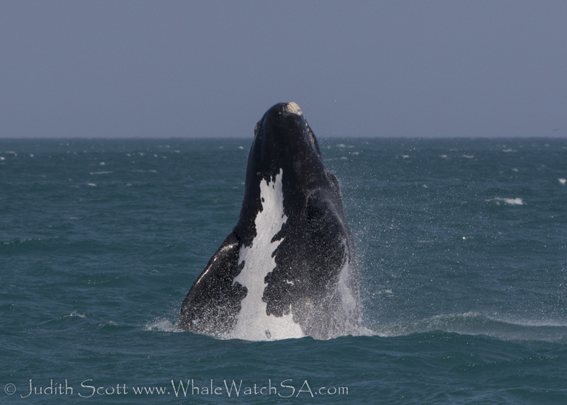 A Right Whale Kind Of Day, 07 October 2018