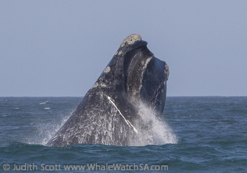 A Westerly Wind And Wonderful Whales, 15 October.