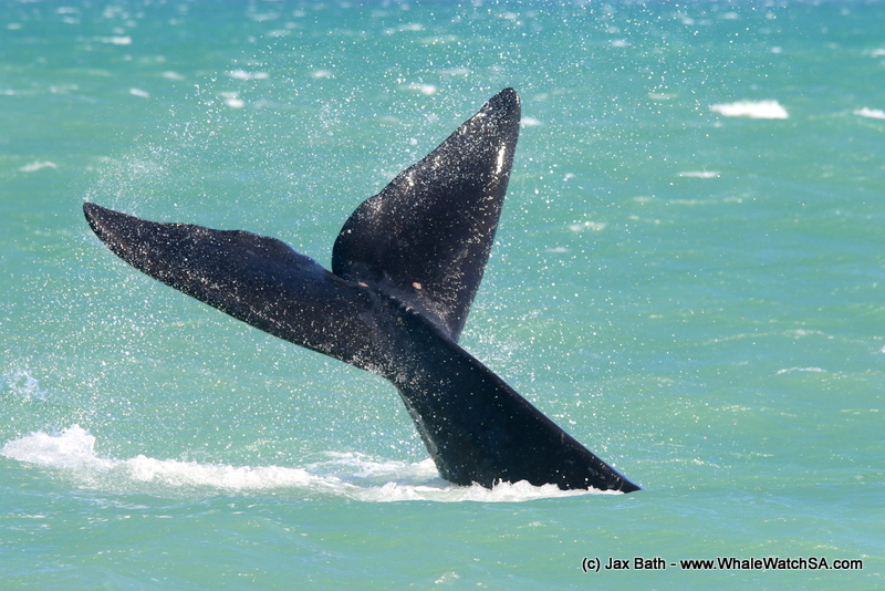 A Whale Of A Time With Our Baleen Beauties, 03 October 2018