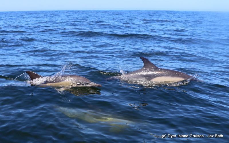 An Incredible Sea Day, 25 february 2019