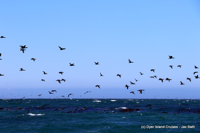 Valentines Day On The Ocean, 14 February 2019
