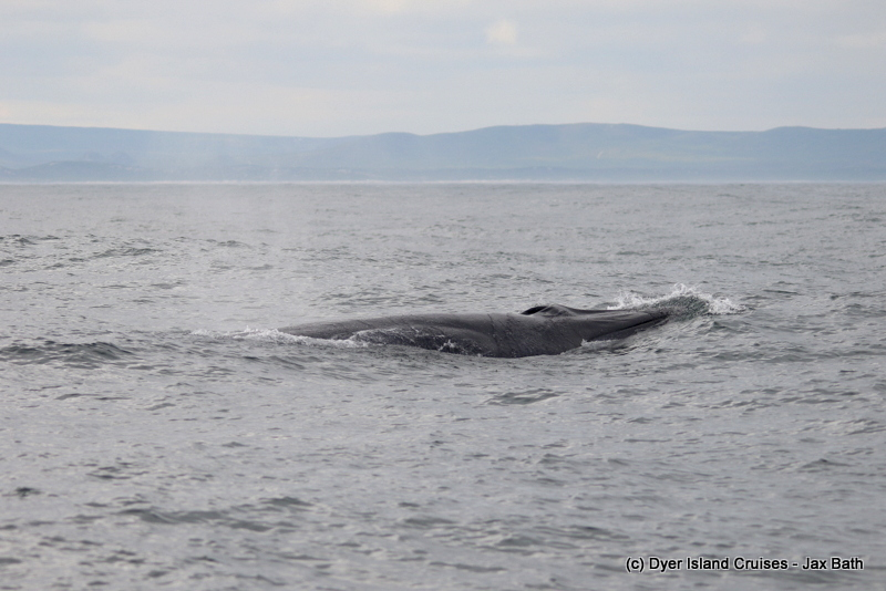 A Brilliant Brydes Whale, 27 April 2019