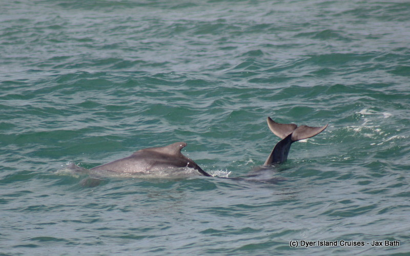 Incredible Indian Ocean Humpback Dolphins, 20 April 2019