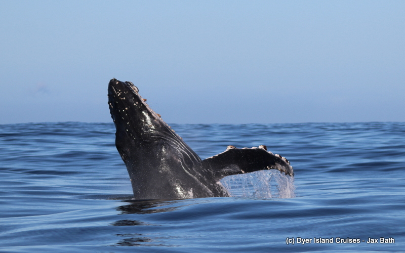 A Once In A Lifetime Humpback Whale Encounter,23 May 2019