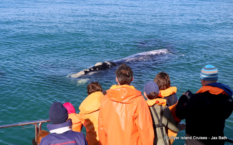 A Magical Southern Right Whale Encounter, 27 June 2019