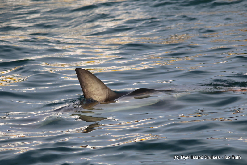2 Species Of Whale, 2 Species Of Dolphin And The Marine Big 5, 01 June 2019
