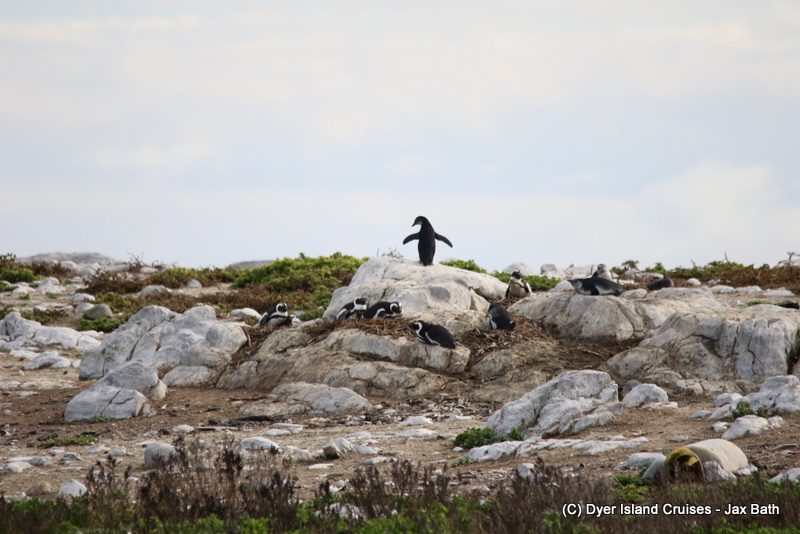 Southern Right Whales And The Marine Big 5, 02 June 2019