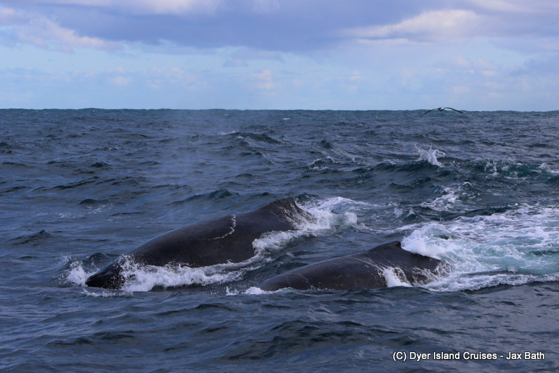 Stunning Whales And An Adventurous Ride ,20 July