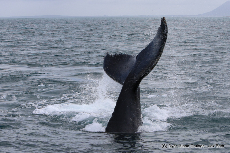 Today's Whale Tail, 02 August 2019