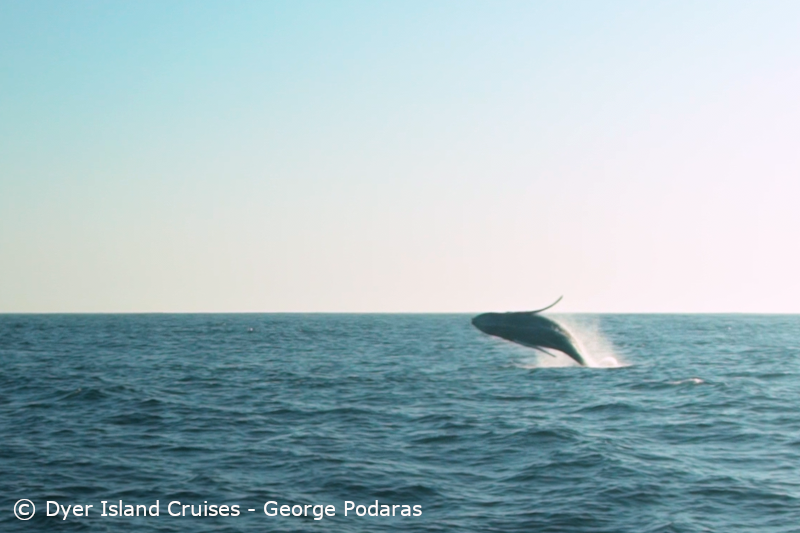 A successful search for whales, 24 August 2019