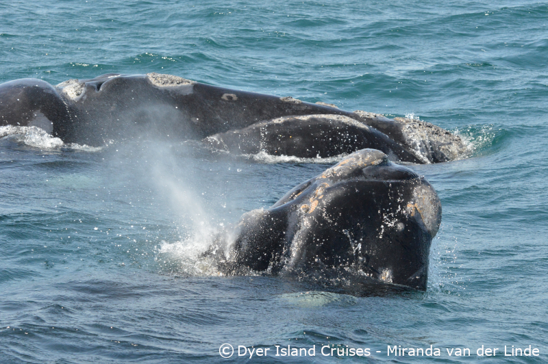 Active whales, 27 September 2019