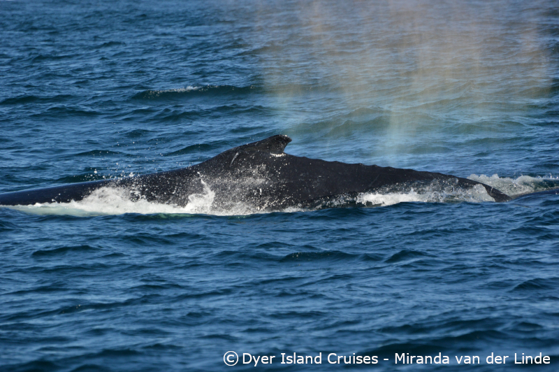 A whale of a day, 14 September 2019
