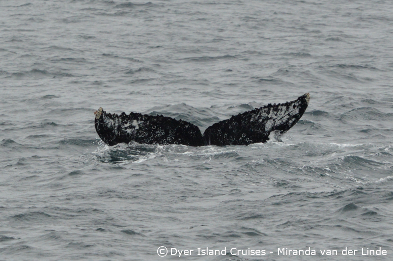 Southern right whales and Humpback whales, 03 September, 2019