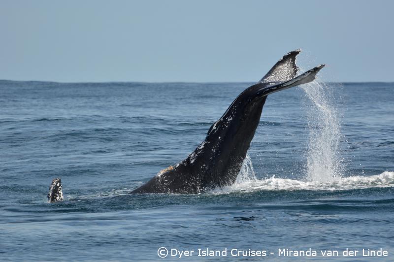 Many marine species, 12 October 2019