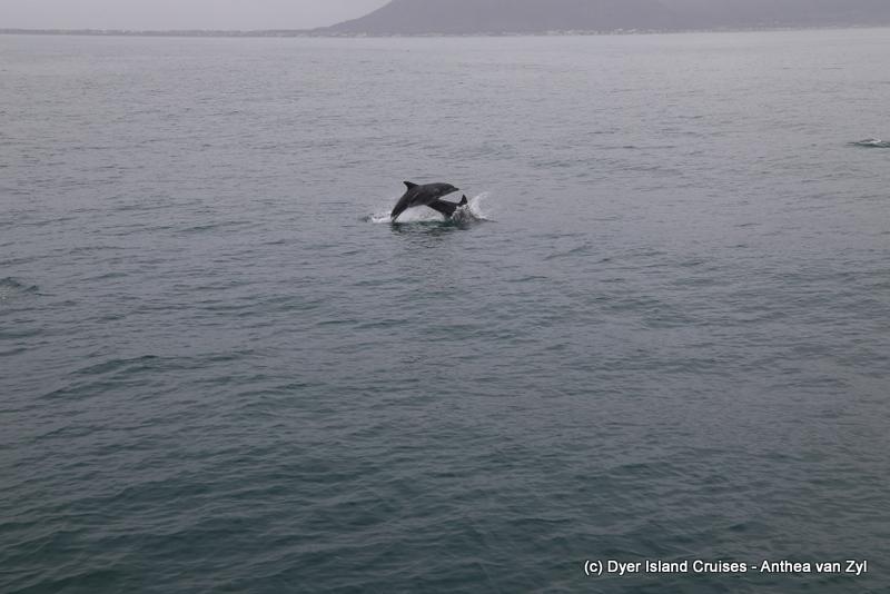 Amazing Dolphins! Eco tour 31st January 2020