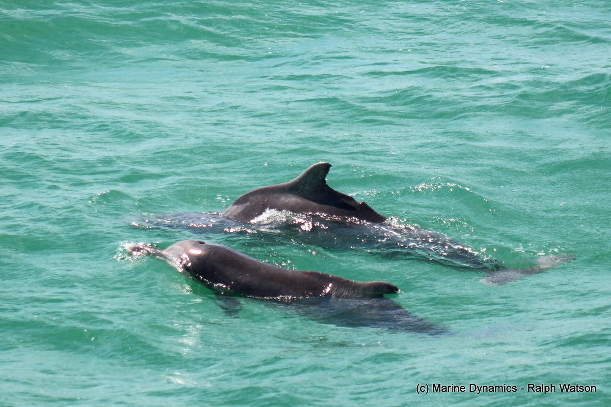 Fins, feathers and flippers! Marine Big 5 daily blog