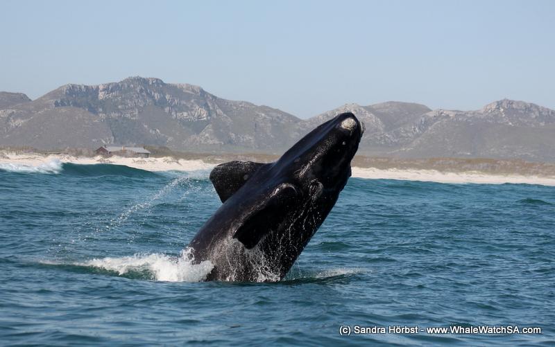 Heritage day specials at sea! Marine Big 5 daily blog