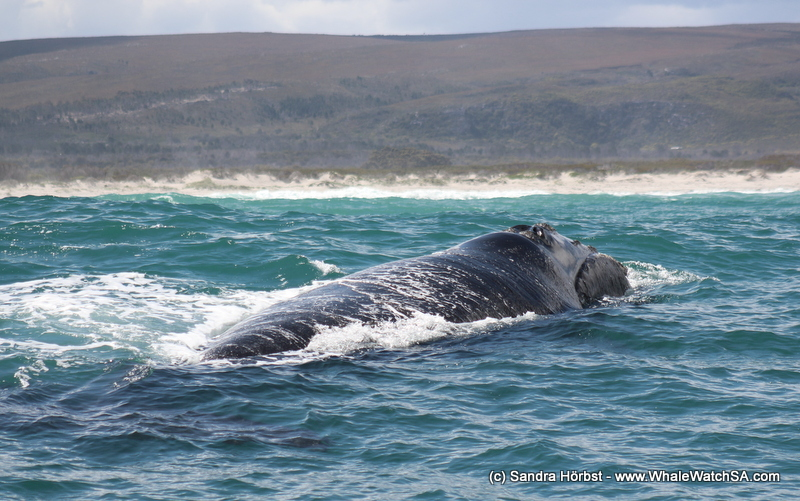 Whales and more! Marine Big 5 daily blog