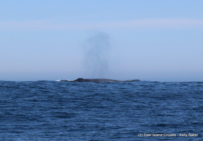 Whale Whisperer's Tuesday wanderings! Marine Big 5 daily blog
