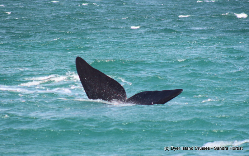 Whales, whales, whales! Marine Big 5 Daily Blog