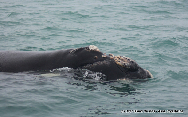 Our misty but whaley trips of the day! Marine big 5 Daily blog