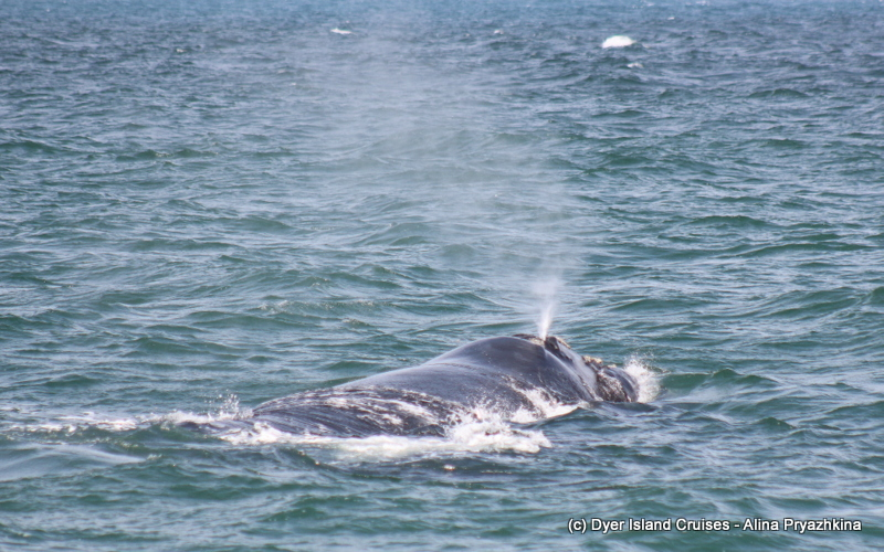 Today was a whale of a day! Marine Big 5 Daily Blog