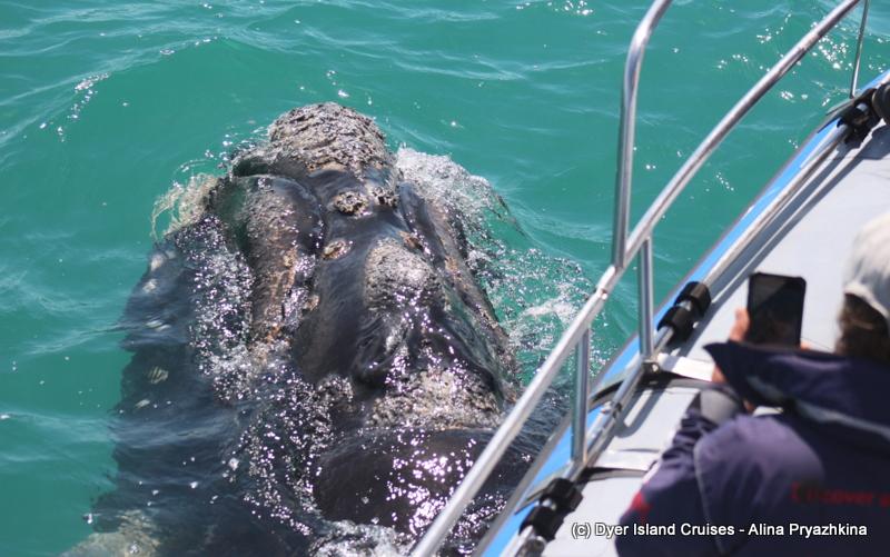 Whales everywhere! Marine Big 5 Daily Blog