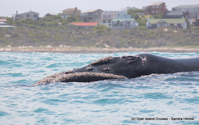 So many great sightings! Marine Big 5 Daily Blog