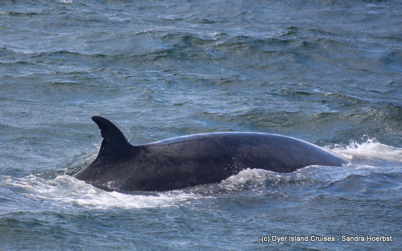Bryde's whale and more! Marine Big 5 Daily Blog