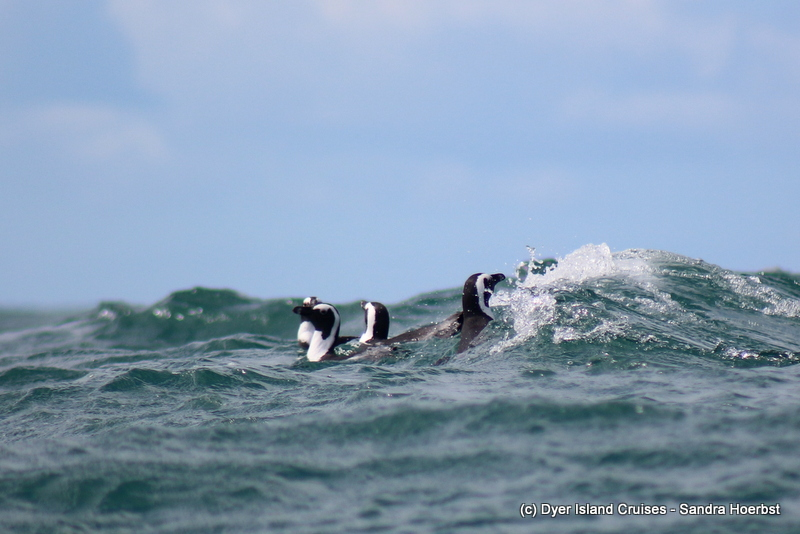 Tuesday wonders at sea! Marine Big 5 Daily Blog