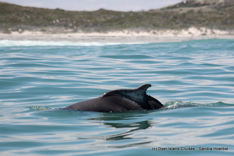 Dolphins, seals, penguins, whales and sharks! Marine Big 5 Daily Blog