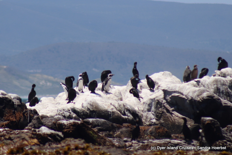 Penguins and more! Marine Big 5 Daily Blog