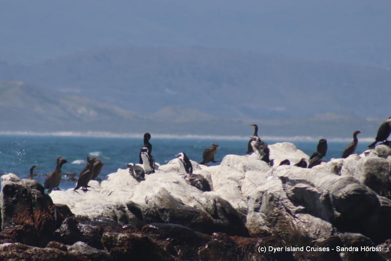 Penguins and seals! Marine Big 5 Daily Blog