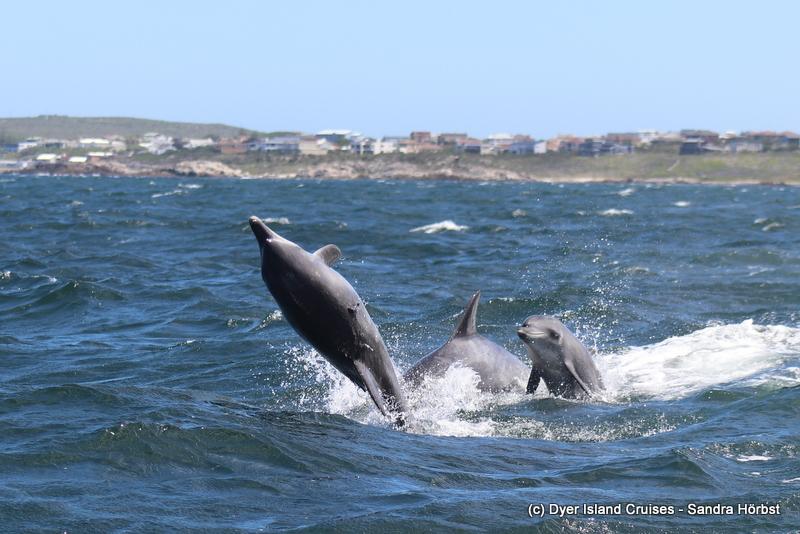 Dolphins! Marine Big 5 Daily Blog