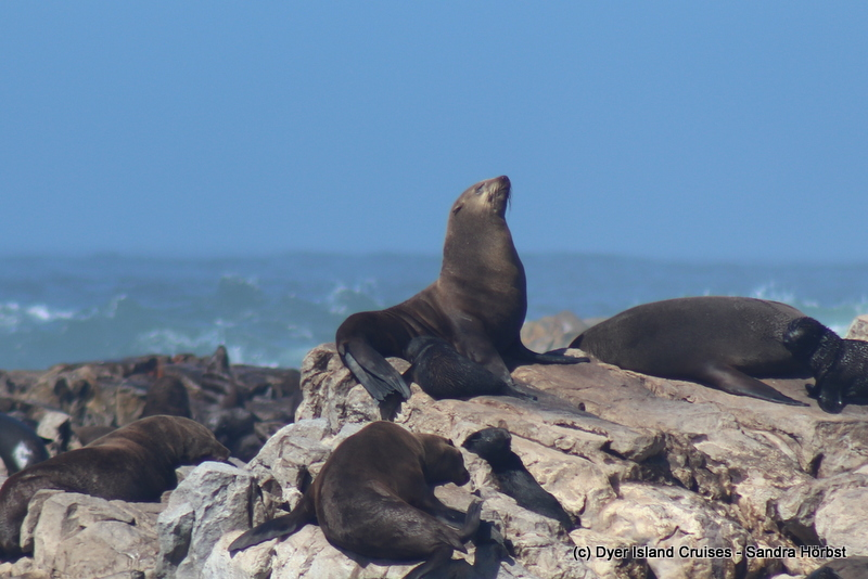 Whale, seals and penguins! Marine Big 5 Daily Blog