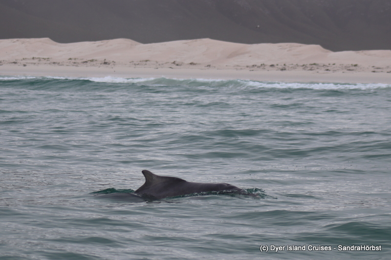 Dolphins, sharks and much more! Marine Big 5 Daily Blog