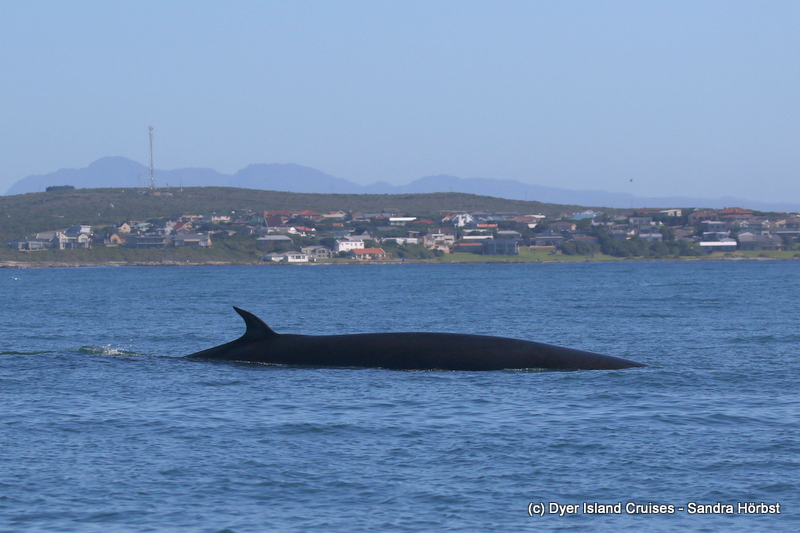 Whales, dolphins and seabirds everywhere! Marine Big 5 Daily Blog