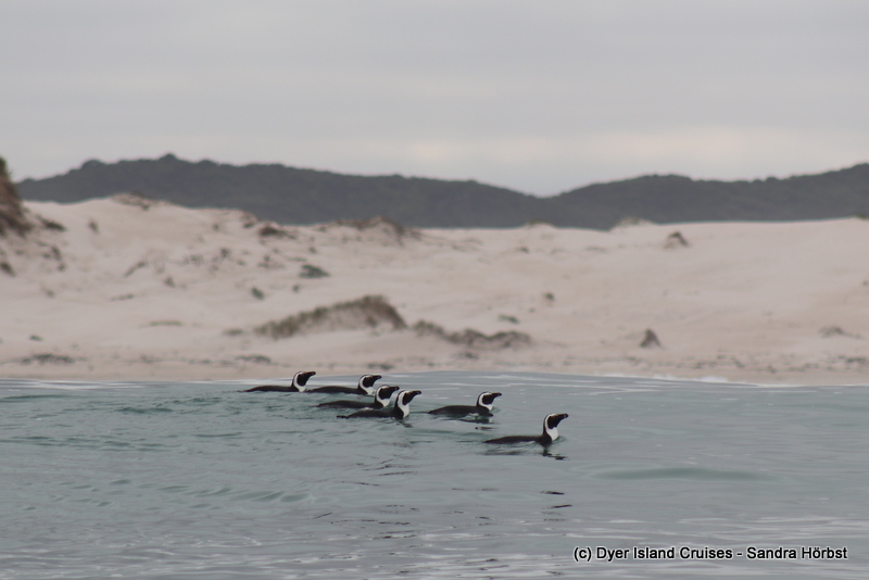 Penguins, a dolphin and whales! Marine Big 5 Daily Blog