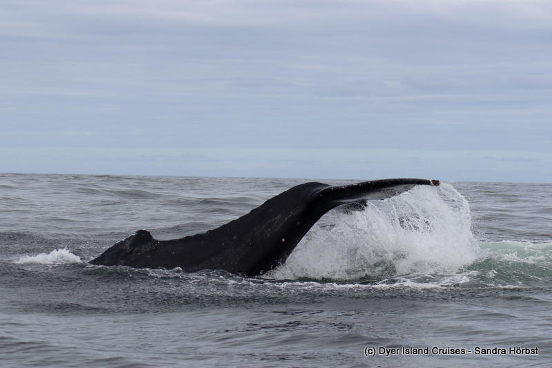 Whale of time Wednesday! Marine Big 5 Daily Blog