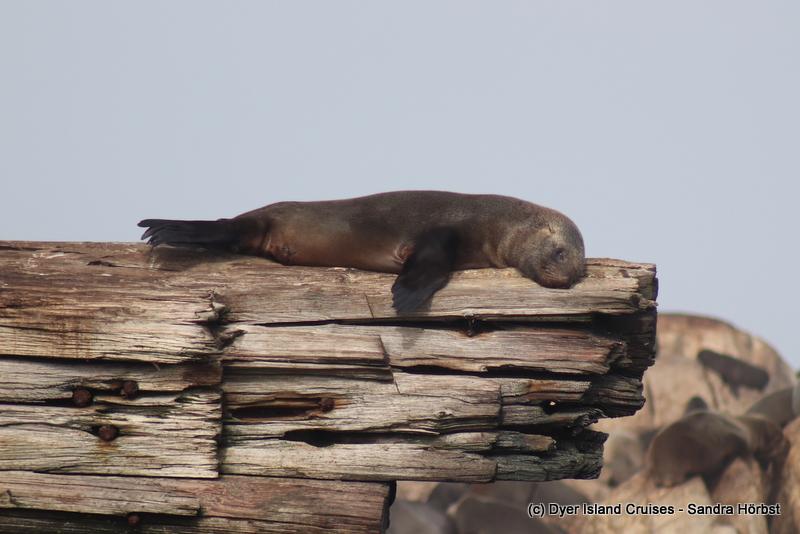 Seals! Marine Big 5 Daily Blog
