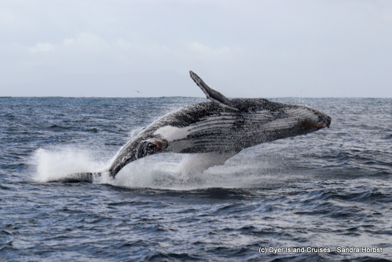Whale of a time and a rainbow! Marine Big 5 Daily Blog
