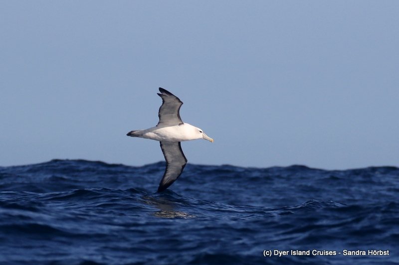Whales, Dolphins and more! Marine Big 5 Daily Blog