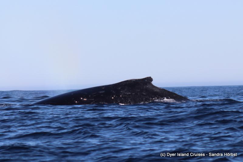 Whales! Marine Big 5 Daily Blog