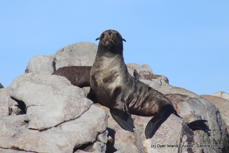 Wildlife Wednesday at sea! Marine Big 5