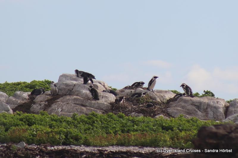Penguins, seals and a sunfish! Marine Big 5 Daily Blog