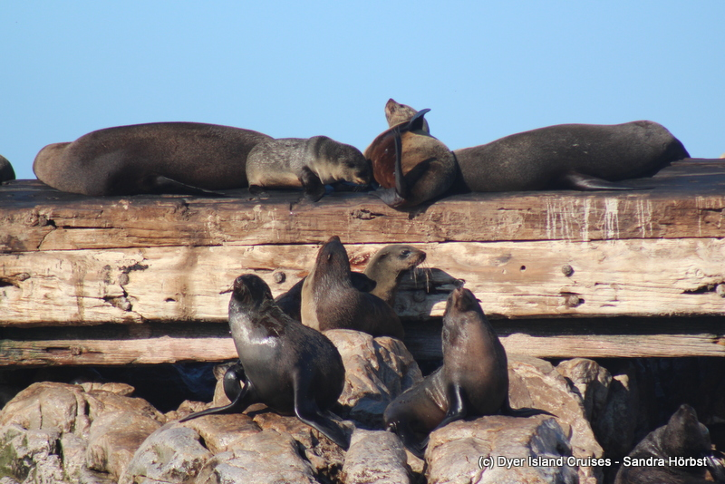 Whales, seals and penguins! Marine Big 5